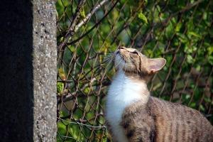 cat-1366167_960_720